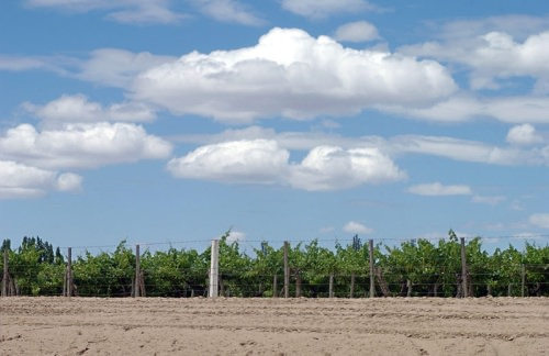 Mendoza Vineyards and Sky