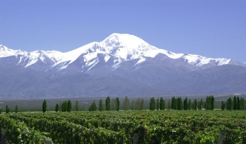 Tupungato Vineyards, Mendoza, Argentina