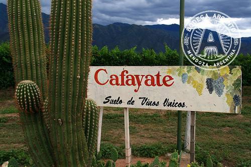 Cafayate Valley Salta Argentina