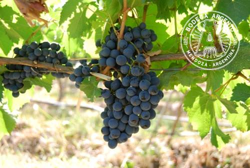 Malbec argentina wine travel culture food the real for Argentinian cuisine history