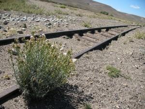 Argentina Travel: Scrubland