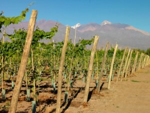 The unique climate and soils of Mendoza