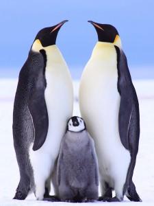 Ushuaia Tourism - Penguins