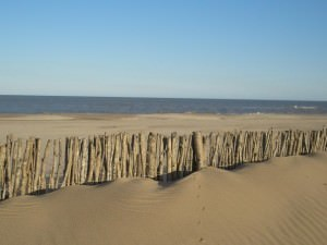 Pine Forest Beach Carilo - Beach
