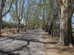 Wine Road in Mendoza