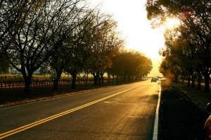 Sunset on Oak Knoll Avenue in Napa