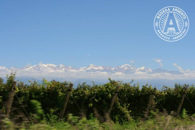 High altitude vineyards near the Andes