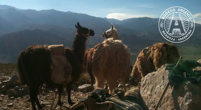 Caravana de Llamas home