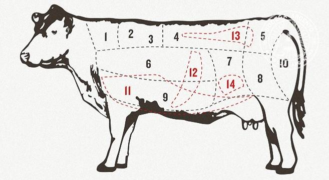 Cow Butcher Diagram Cut Beef Set 480382762 additionally Safe likewise StructureAndLameness further London Broil moreover The skeleton. on cow meat diagram