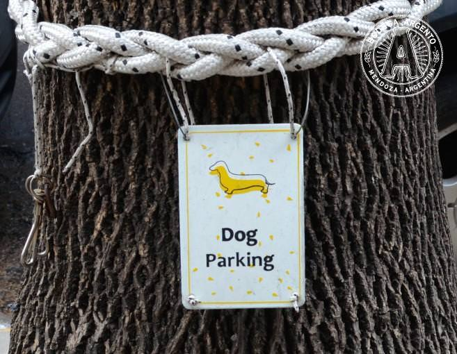 Dog parking at Le Pain Quotidien; photo by Caitlin McCann