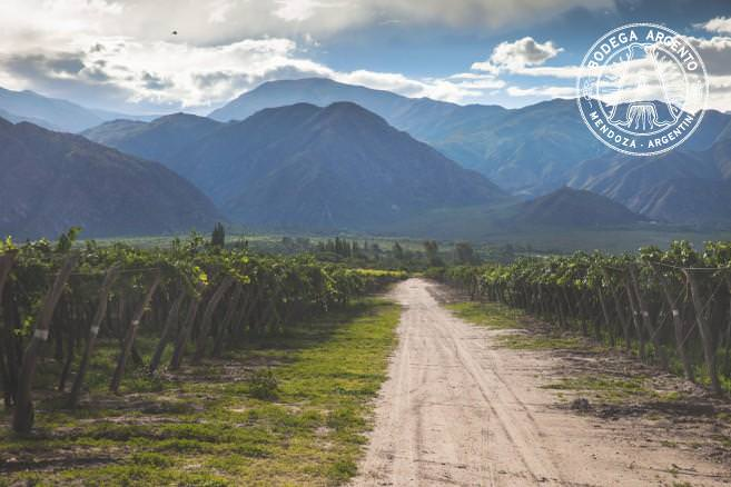 Vineyards in Cafayate, Salta